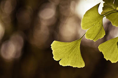 Photograph - Ginkgo Leaves by Lori Coleman