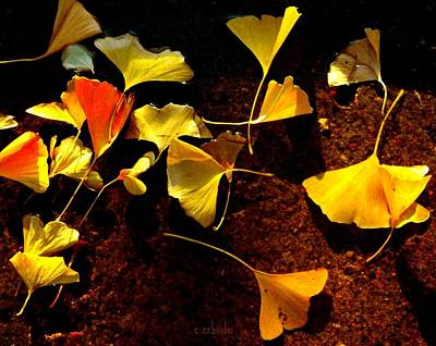 Photograph - Ginko Birdbath by Chris Berry