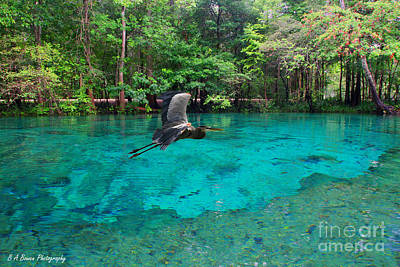 Photograph - Ginnie Springs by Barbara Bowen