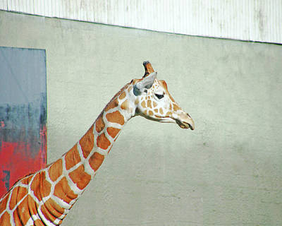 Photograph - Giraffe As Art by Lizi Beard-Ward
