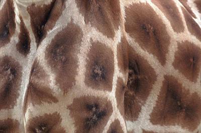 Giraffe's Hide Art Print by John Foxx