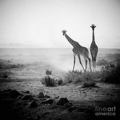 Giraffe Wall Art - Photograph - Giraffes In Amboseli National Park Kenya by Konstantin Kalishko