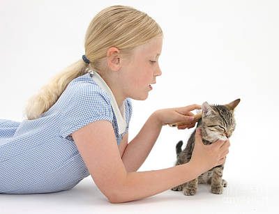Pet Care Photograph - Girl Grooming Kitten by Mark Taylor