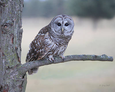 Photograph - Give A Hoot by Gerry Sibell