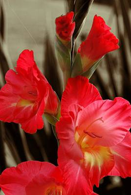 Digital Art - Gladioli 2 by Fran Woods