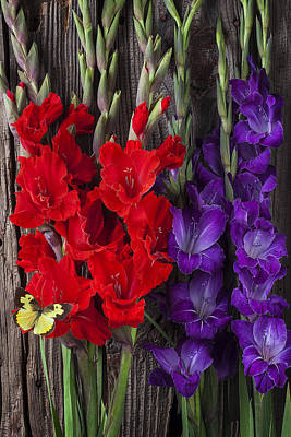 Red Gladiolus Photograph - Gladiolus And Butterfly by Garry Gay