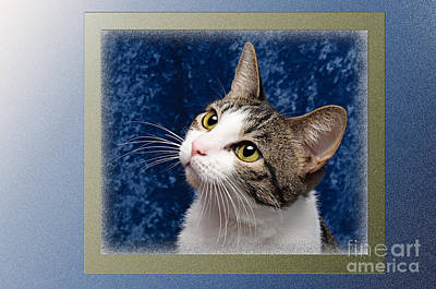 Felines Photograph - Glamour Girl by Andee Design