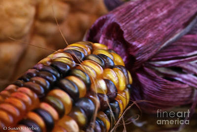 Photograph - Glamourous Yield by Susan Herber