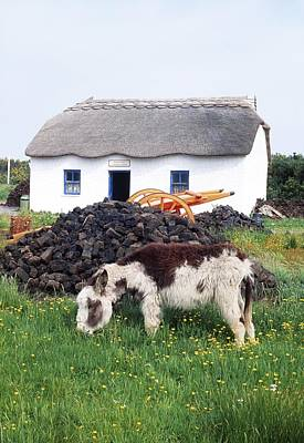 Turf Photograph - Glenbeigh, Co Kerry, Ireland Donkey In by The Irish Image Collection