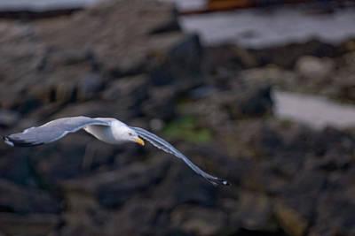 Photograph - Gliding by Paul Mangold