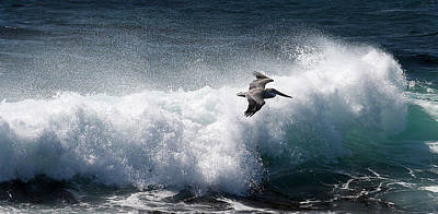 Print featuring the photograph Gliding Pelican by Michael Rock