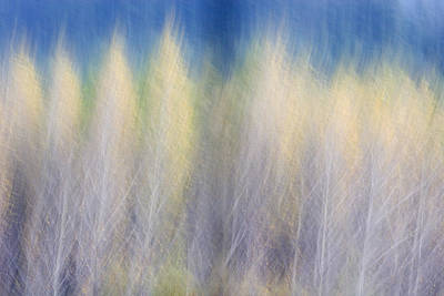 Photograph - Glimpse Of Trees by Carol Leigh