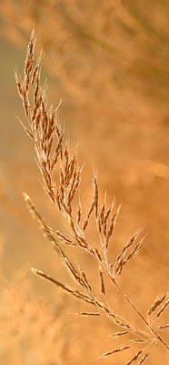 Photograph - Glistening Grass by Shari Jardina