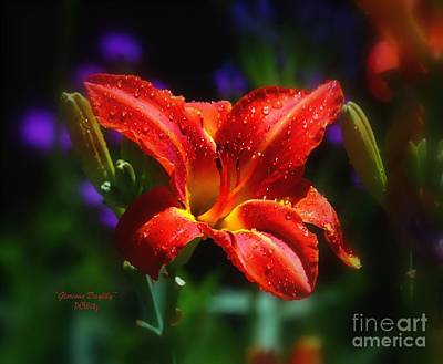 Photograph - Glorious Daylily by Patrick Witz