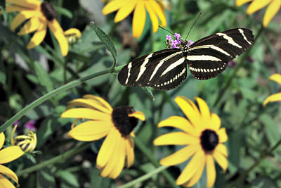 Photograph - Glorious Stripes by Lora Mercado