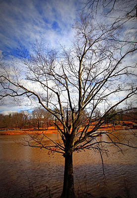 Photograph - Glorious Tree by Sheila Kay McIntyre