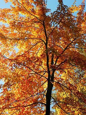 Glory Of Autumn Art Print by Jennifer Compton