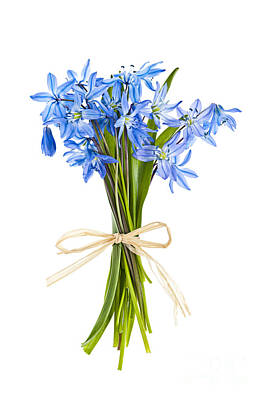 Arrange Photograph - Blue Wildflower Bouquet by Elena Elisseeva