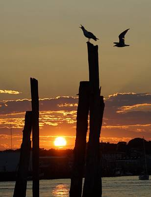Photograph - Gloucester Sunset by Matthew Green
