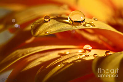 Glowing Amber Art Print by Tracy  Hall