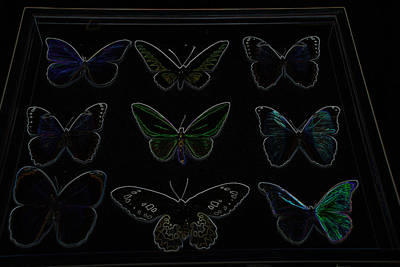 Photograph - Glowing Edge Butterflies by Richard Bryce and Family