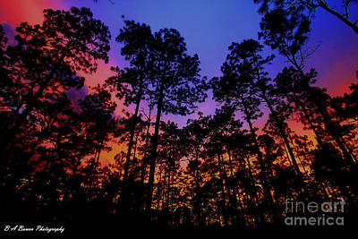 Photograph - Glowing Forest by Barbara Bowen