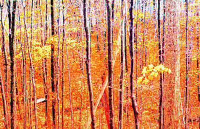 Glowing Forest  Art Print by Lyle Crump