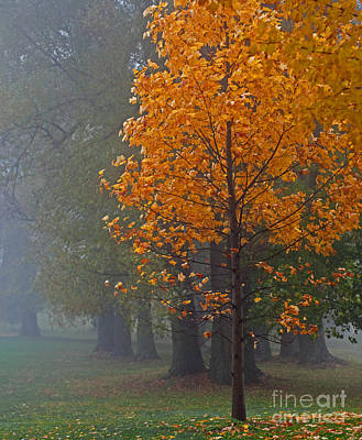 Photograph - Glowing In The Fog by Barbara McMahon