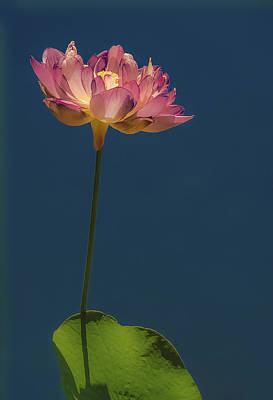 Glowing Lotus Art Print by Jill Balsam