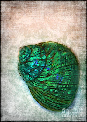Photograph - Glowing Seashell by Judi Bagwell