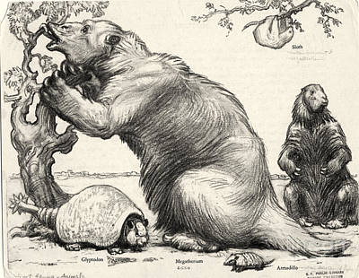 Glyptodon And Megatherium, Extinct Fauna Print by Science Source