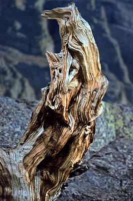 Gnarled Tree Stump Art Print by Rod Jones
