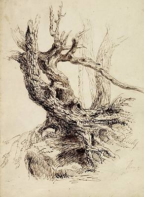 Landmarks Drawing - Gnarled Tree Trunk by Thomas Cole