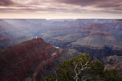 Grand Canyon Photograph - Gnarly Tree In The Canyon by Andrew Soundarajan