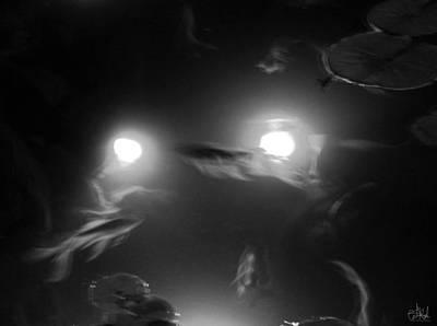Wall Art - Photograph - Go Fish by Cate Rubin