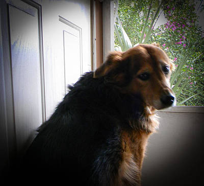 Screen Doors Photograph - Go Out Please by Christy Usilton