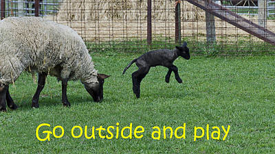 Sheep Photograph - Go Outside And Play by LeeAnn McLaneGoetz McLaneGoetzStudioLLCcom