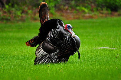 Photograph - Gobble Gobble Gobble by Mike Martin
