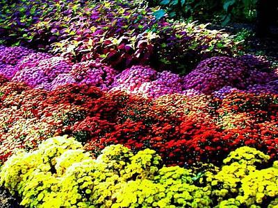 Photograph - God's Garden by Laura  Grisham