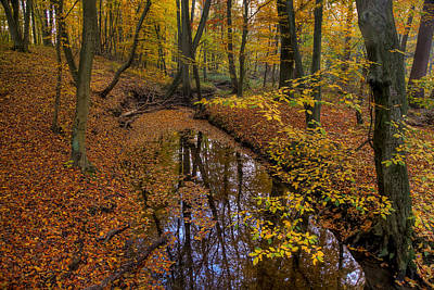 Photograph - Going Through Yellow by Andy Bitterer