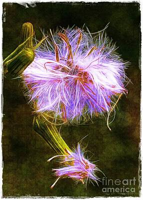 Photograph - Going To Seed by Judi Bagwell