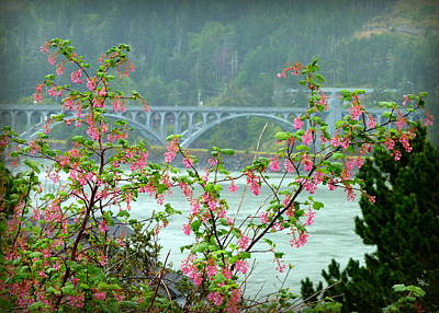 Photograph - Gold Beach Bridge by Cindy Wright