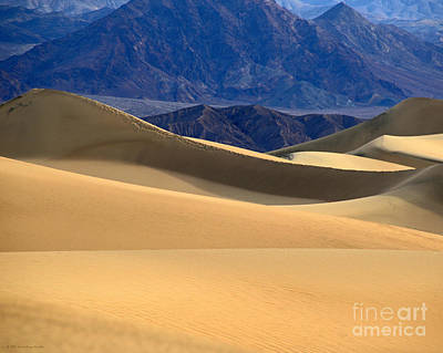 Photograph - Gold Desert Sand Waves Death Valley National Park by Schwartz Nature Images