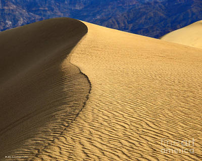 Photograph - Gold Desert Sands Death Valley National Park by Schwartz Nature Images