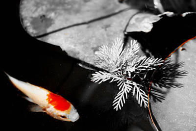 Photograph - Gold Fish Black And White by Shehan Wicks