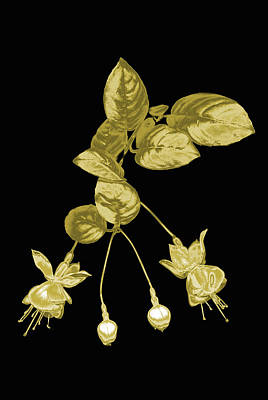 Gold Fuchsia Flowers On A Black Background Art Print by Mike Hill