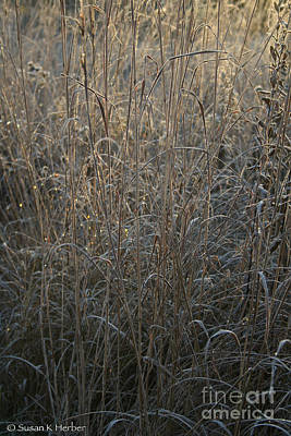 Photograph - Gold Grass by Susan Herber