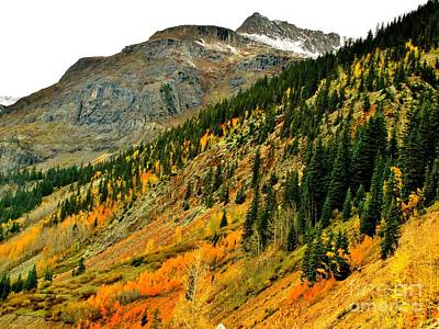 Photograph - Gold In Colorado by Marilyn Smith