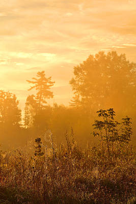 Petrie Island Photograph - Gold Morning by Joshua McCullough