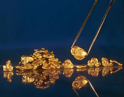 Gold Nugget Photograph - Gold Nugget Held In Twizzers by David Nunuk